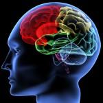 brain in neurofeedback for adhd